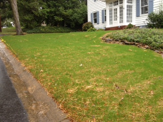 Lawn 14 days after seeding