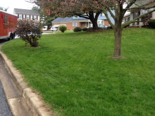 Lawn 4 weeks after seeding