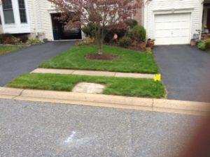 Lawn 6 weeks after seeding