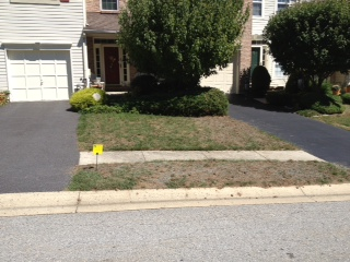 Lawn after seeding