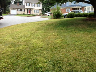Lawn after spraying