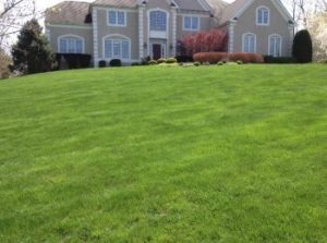 Professional Weed Control by Layton's Professional Care for Lawns and Landscaping in Delaware